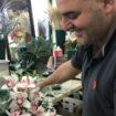 Fiorista regale piante