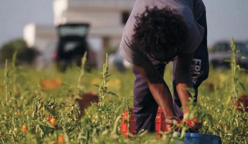 Afragola è il secondo comune d'Italia a vietare il lavoro agricolo nelle ore più calde